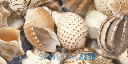 Декор Sea Breeze (Shells) 30x60cм